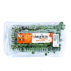 Simply Fresh Organics Marjoram