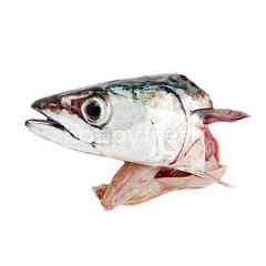 Head Mackerel