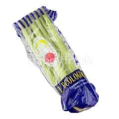 P.B.U Imported Celery