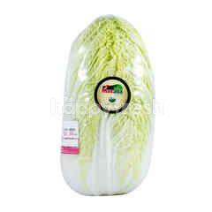 Masada Organic White Chinese Cabbage