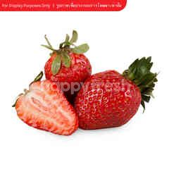 Big C Imported Strawberry