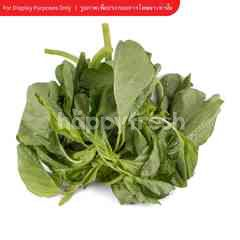 Tesco Spinach