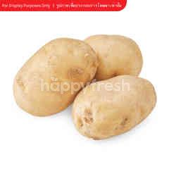 Natural & Premium Food Organic Potato