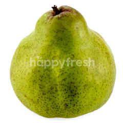SA Packham Pear