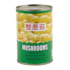 Tts Champignons Mushrooms Choice Whole