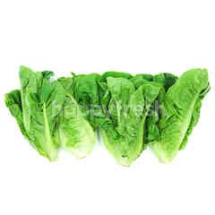 MJ Organic Mini Cos Lettuce