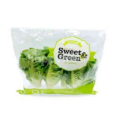 Sweet & Green Baby Cos Lettuce