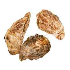 หอยนางรม ไซส์ M