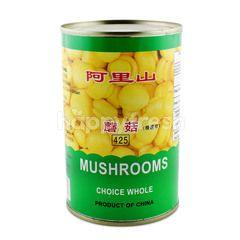 ALI SHAN Mushroom