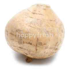 Local Turnip (Sengkuang)