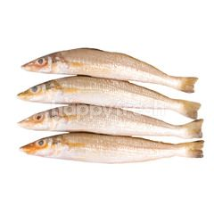 Gourmet Market Silver Silago Fish