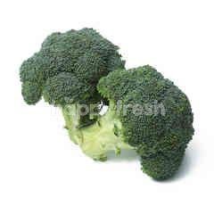 Australian Broccoli