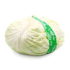 Round China Cabbage