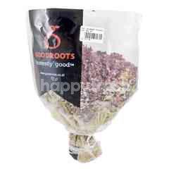 Goodroots Hydroponic Lollorosa Lettuce