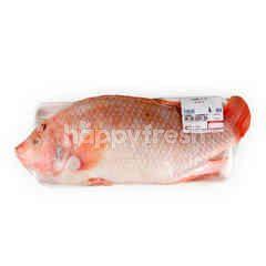 บิ๊กซี ปลาทับทิม XL