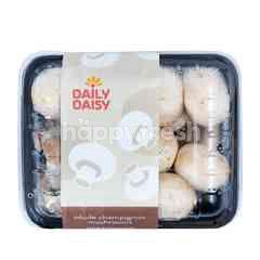 Daily Daisy Champignon Mushroom