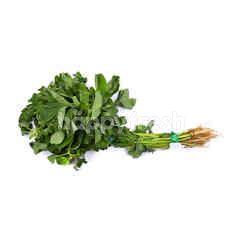 Spinach (Bayam)