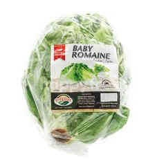 O Fresh Baby Romaine Lettuce