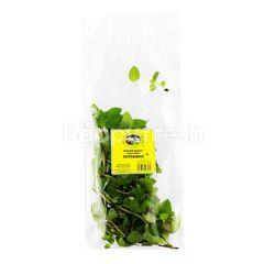 Peppermint Herbs
