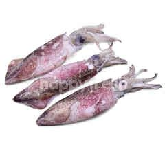 White Squid (Sotong Putih) L