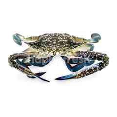 Flower Crab (Ketam Bunga)