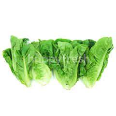 Mini Cos Lettuce