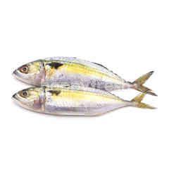 Castello Fish (Ikan Mabong)