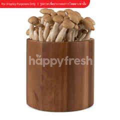 Ronfun Mushroom Brown Shimeji Mushroon