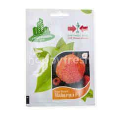 Urban Farming Seeds Cap Panah Merah Maharani F1 Bibit Marigold