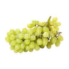 Anggur Stella Bella