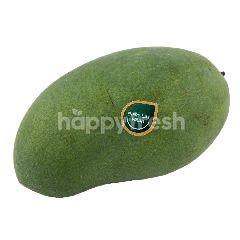 Super Harum Manis Mango
