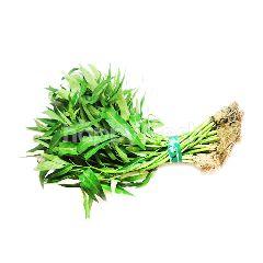 FreshBox Kangkung Hidroponik