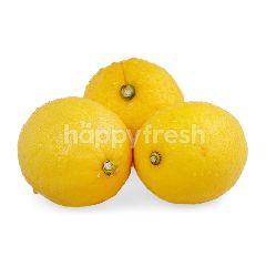 FreshBox Lemon Cina