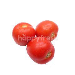 FreshBox Tomat Merah
