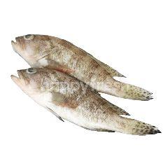 Ikan Kerapu