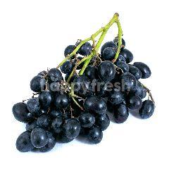 Anggur Autum Royal