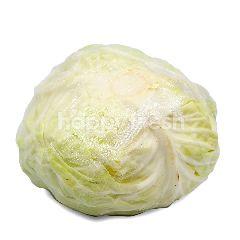 Cameron Sweet Cabbage (Kobis)