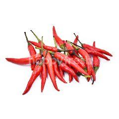 Red Chilli Padi