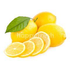 SHB Fresh Grab & Go Lemon Impor Paket