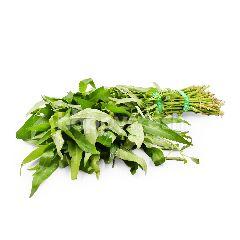 Fresh Kangkung