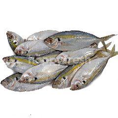 Yellowtail Scad Fish