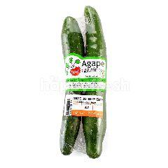 AGAPE ORGANIC Japanese Cucumber