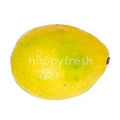 Lemon Impor