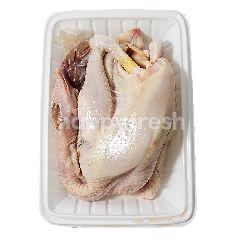 Ayam Kampung Utuh