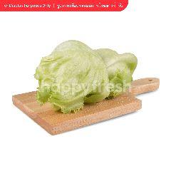 Tesco Crisphead Lettuce