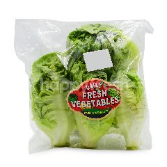 Daily Fresh Vegetables Choy Tam