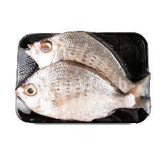 กูร์เมต์ มาร์เก็ต ปลาข้าวเม่า