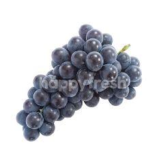Greenvil Korea Kyoho Grape