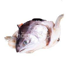 Kepala Ikan Trout