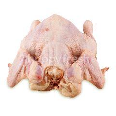 Ayam Broiler Utuh